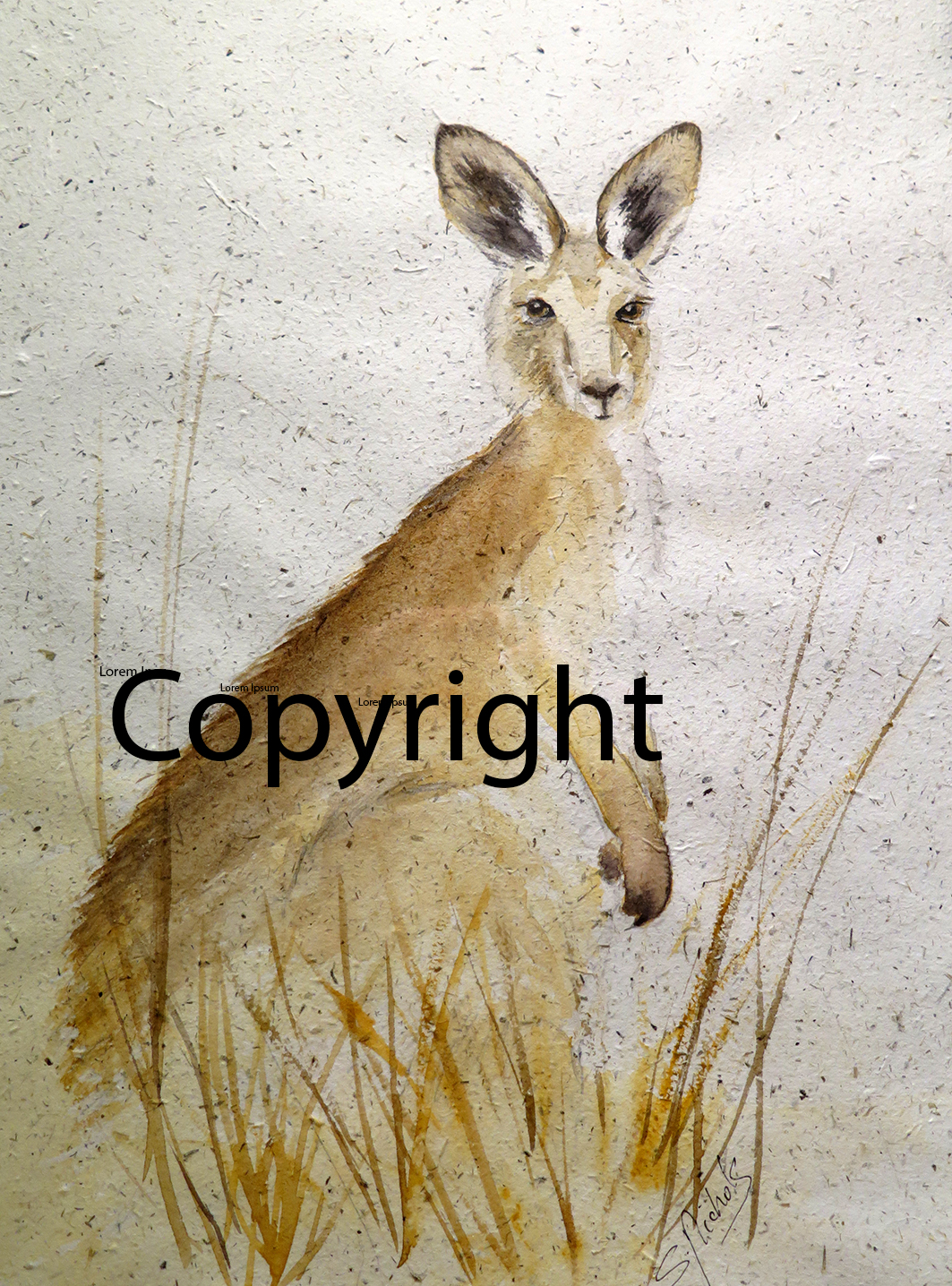 Kangaroo_sml