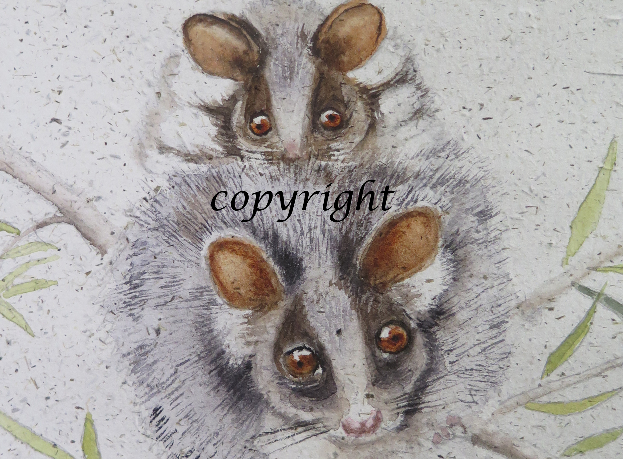 Ringtail_possums