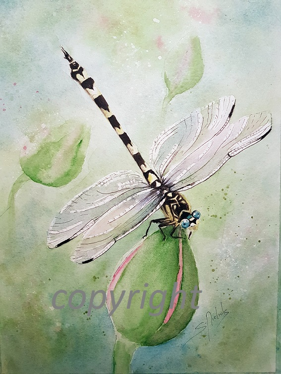Dragonfly-on-lily_sml